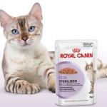 muestras-gratuitas-sterilised-gatos