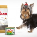 Lote de productos Royal Canin para Yorkshire