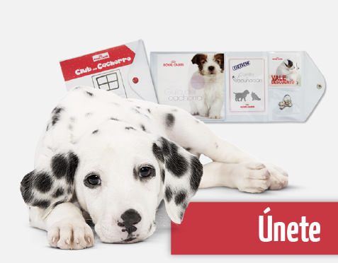 regalos club cachorro royal canin