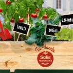 "Huerto Urbano Gratis - Promoción tomate ""Solís"""